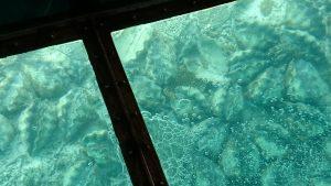 川平湾でのグラスボートからの眺め